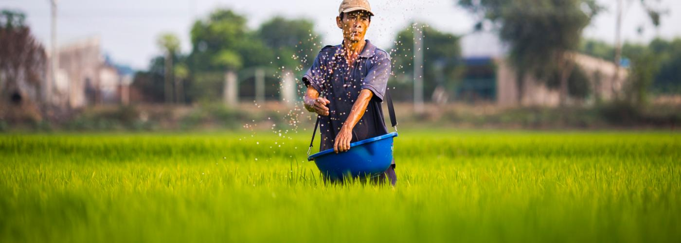 Man in Rice Paddy