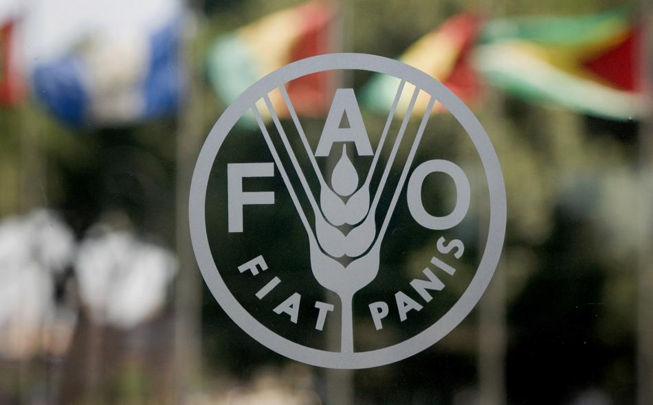 Scientists praise and challenge FAO on agroecology