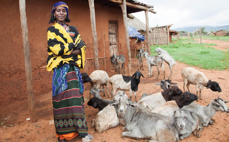 Lady with goats as an example of agroecology