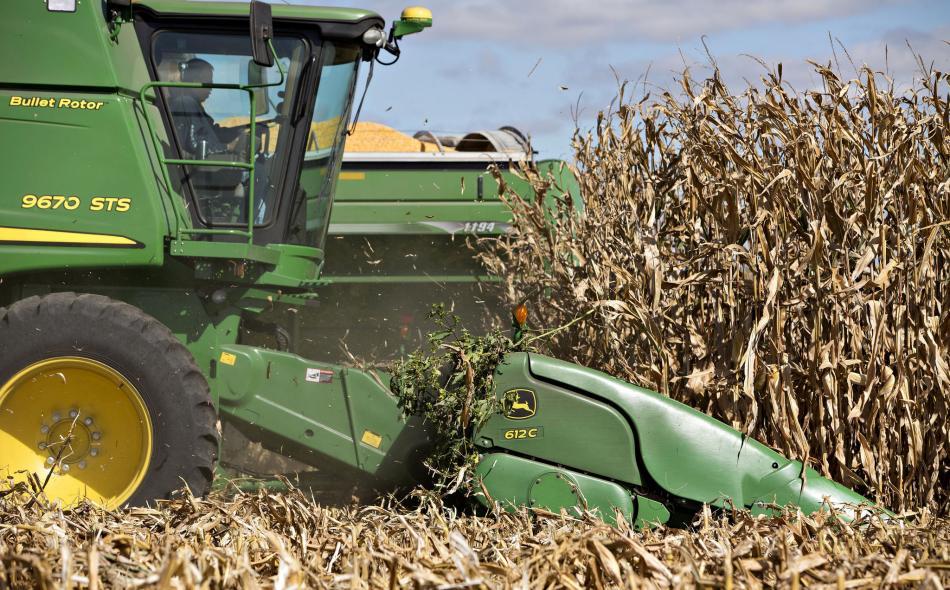 Do No Harm NAFTA Non Regulation Of GMOs And Mexican