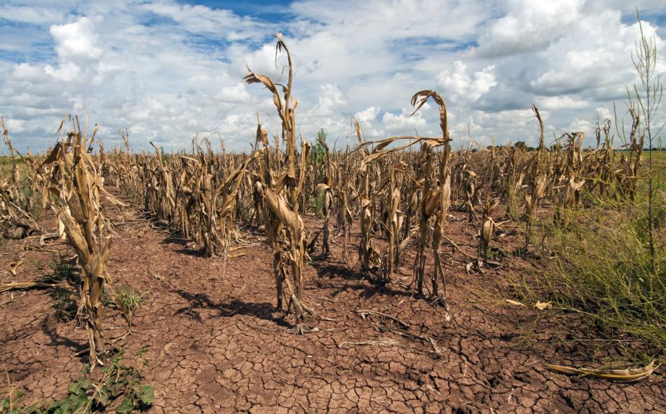 Drought and corn
