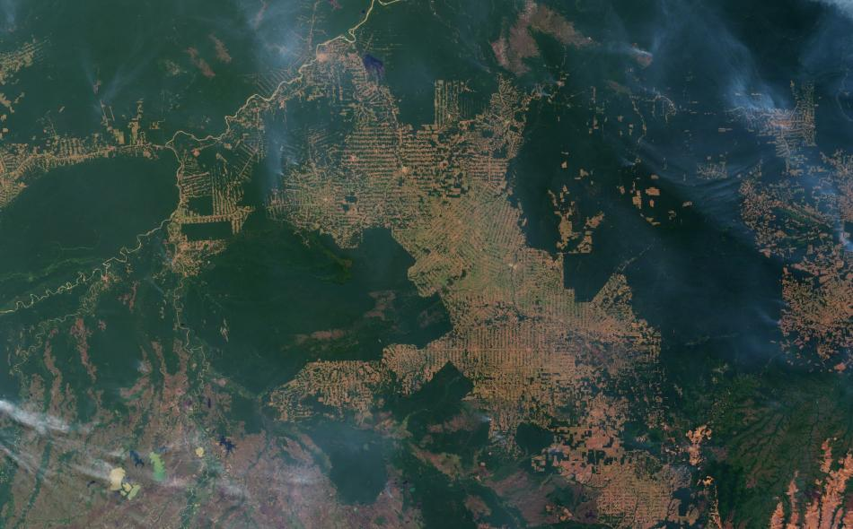 amazon rain forest destruction