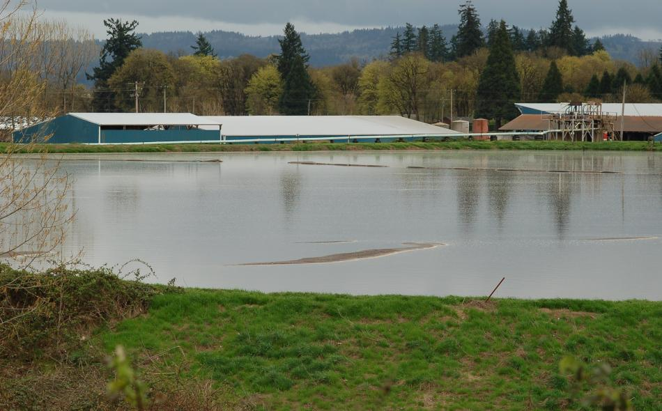 Dairy and manure lagoon