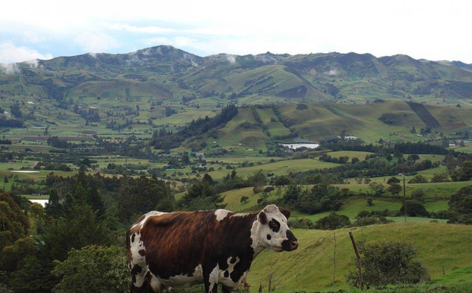 The U.S.-Colombia trade agreement: A volatile agenda on agriculture