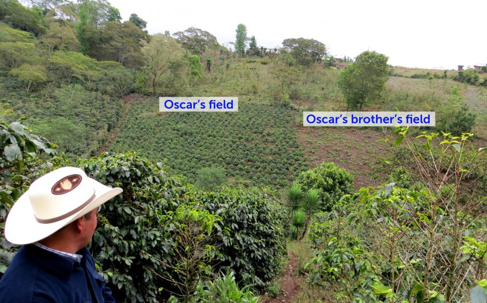 Agroecology, the expertise coffee needs