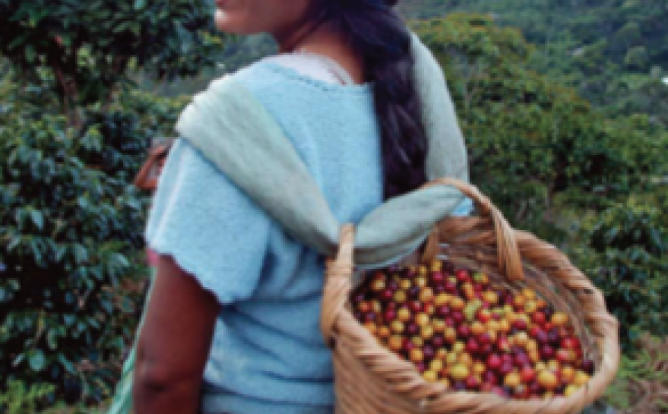 Grow Ahead connects coffee drinkers and growers in alternative finance model