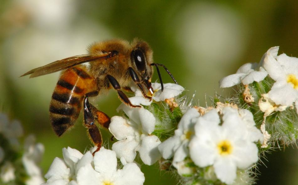 Pollinators and the rigged neonic seed market