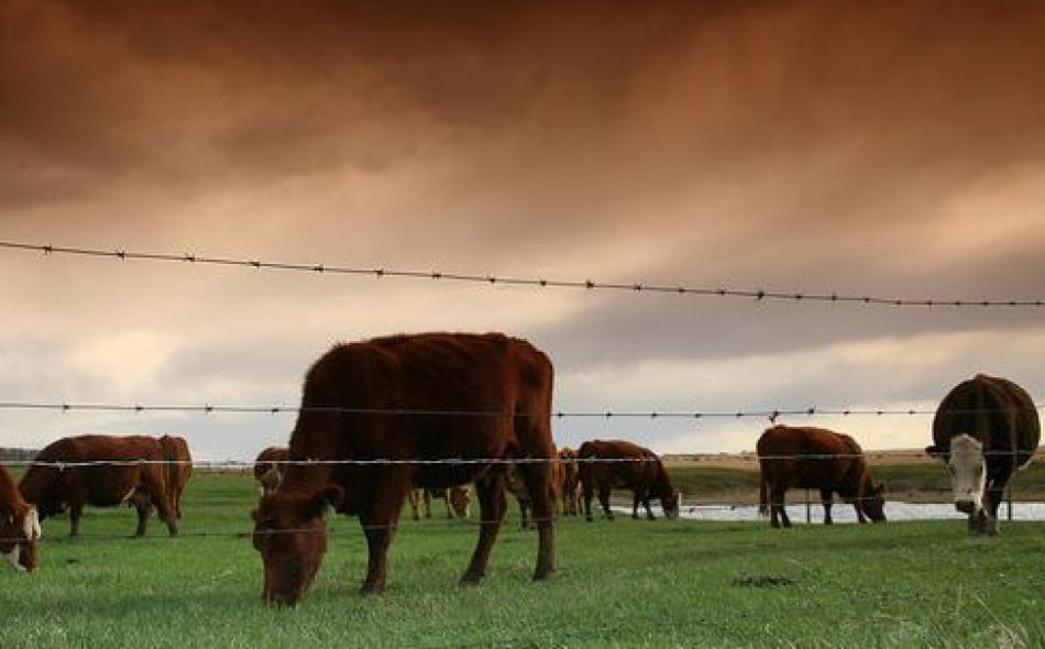 Big Meat Lobby to Attack New Dietary Guidelines
