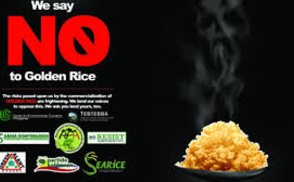 golden rice Organizations involved in the development of golden rice the golden rice humanitarian board the international rice research institute bill and melinda gates foundation.