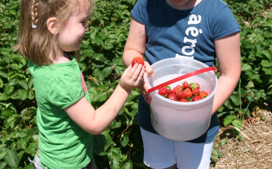 Planting the seeds: Connect kids with farms using the MN Grown directory