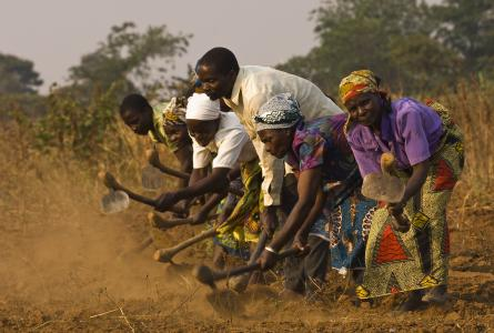 Farmers in Africa hoeing a field