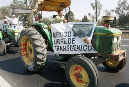 "Tractor caravan to Mexico City farmer protest demands ""Mexico Free of Transgenics"""