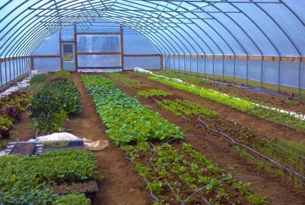 High tunnels can bring benefits to farmers and schools